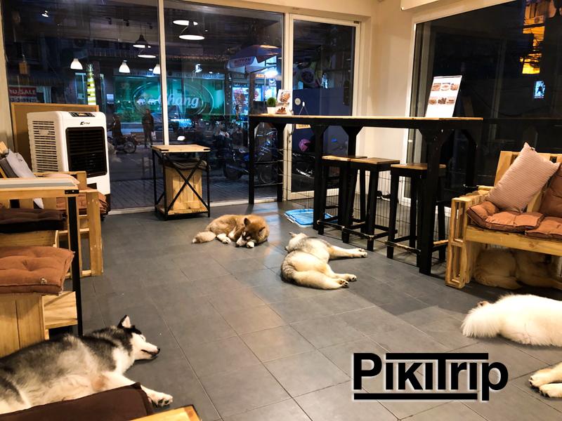 Собачье кафе в Паттайе