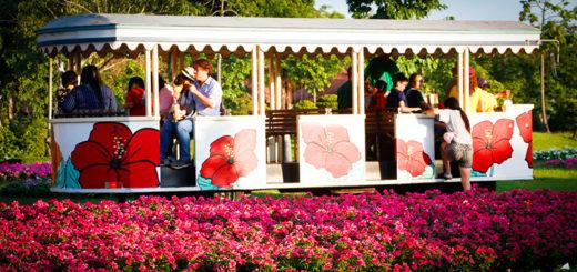 Ежегодный фестиваль цветов Таиланда в Бангкоке