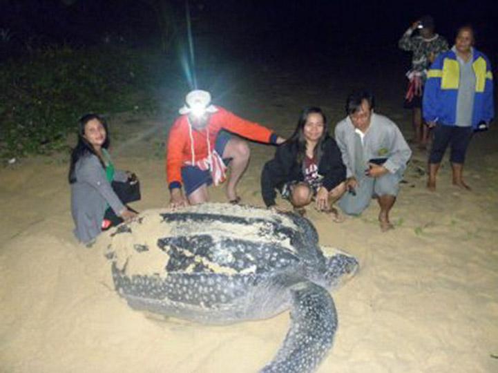 черепаха на пляже Май Кхао